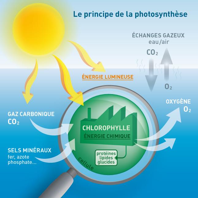 Phytoplancton - Où vit le phytoplancton