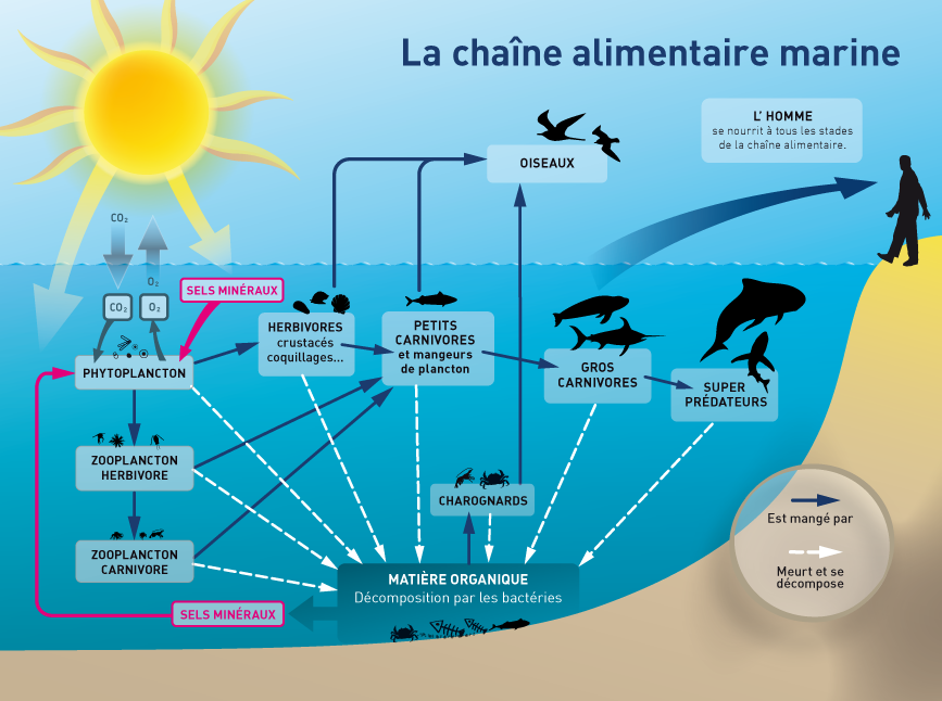 zooplancton-oceanique